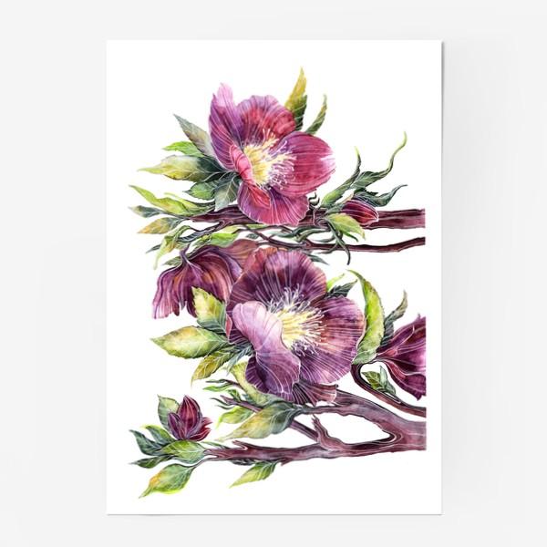 Постер «Цветы Морозник»