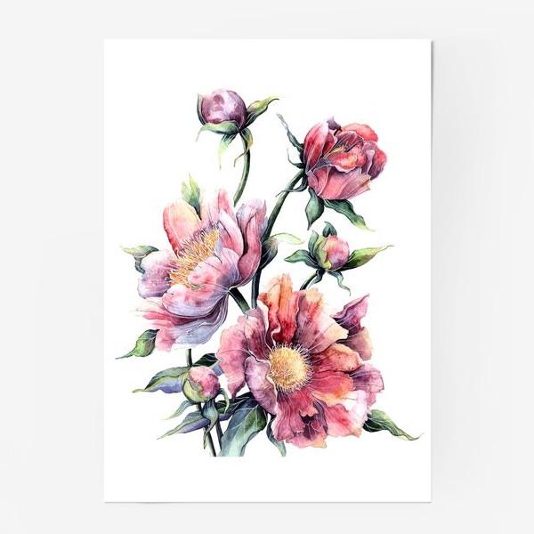 Постер «Цветы Пионы»