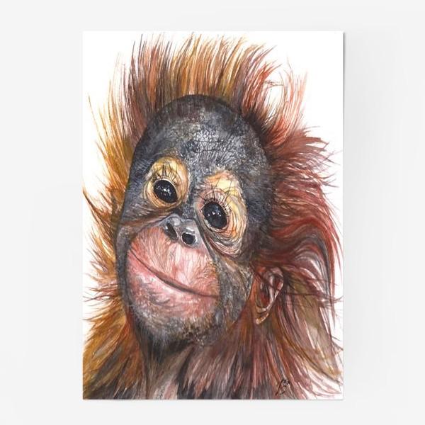 Постер «Детёныш орангутанга»