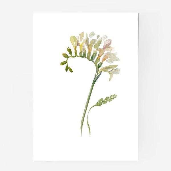 Постер «Белая фрезия, нежная»