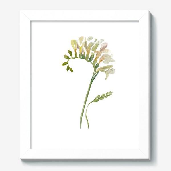 Картина «Белая фрезия, нежная»