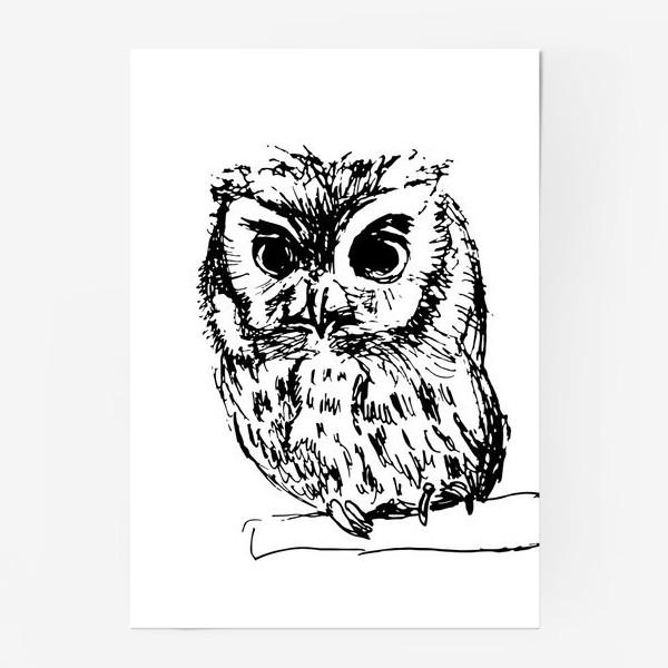 Постер «Owl sketch»