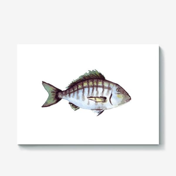 Холст «Рыба. Зубан большеглазый.»