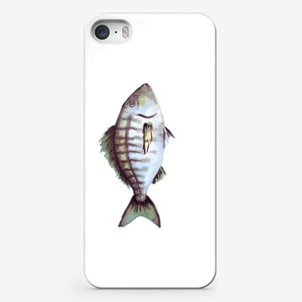Чехол iPhone «Рыба. Зубан большеглазый.»