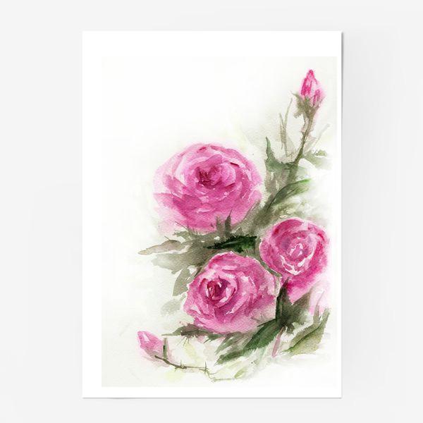 Постер «Роза акварель»