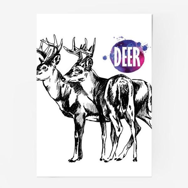 Постер «два взрослых оленя»
