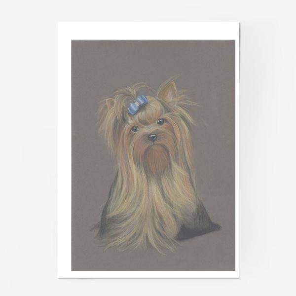 Постер «Йоркширский терьер с голубым бантиком и грустным взглядом.»