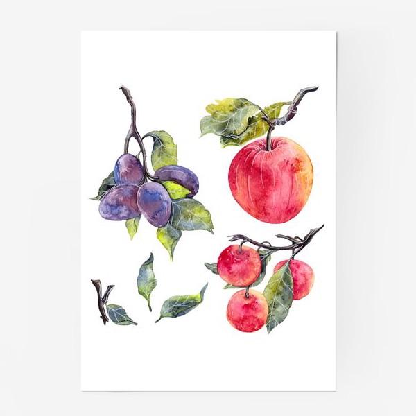 Постер «Слива и яблоко»