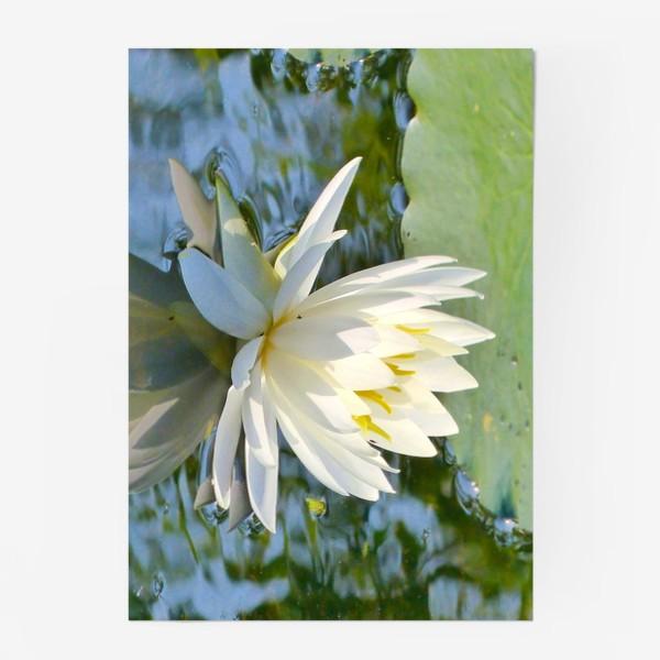 Постер «Белый лотос на воде»
