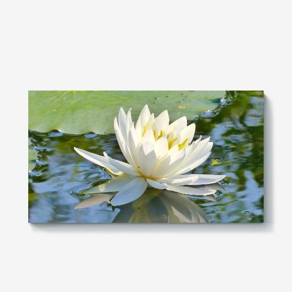 Холст «Белый лотос на воде»