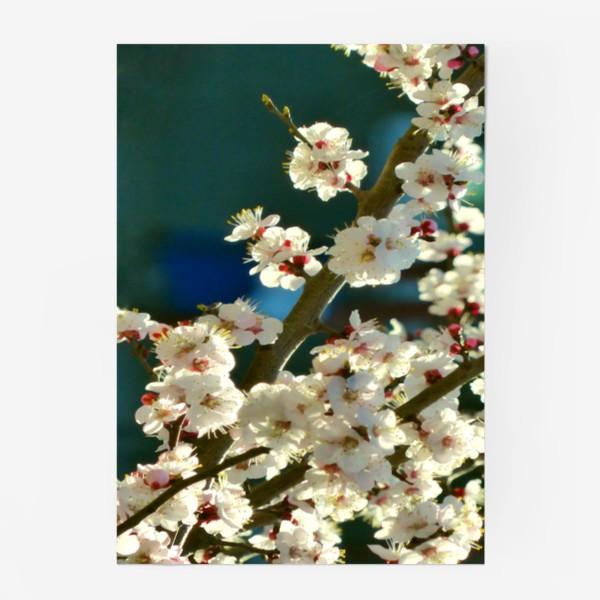 Постер «Яблоня в цвету»