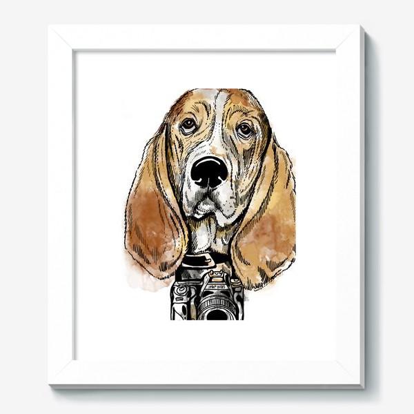 Картина «Собака бассет хаус - фотограф»