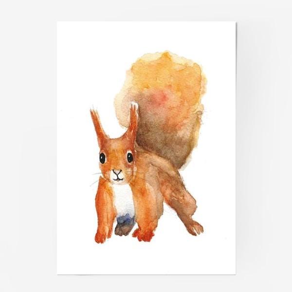 Постер «Белка»