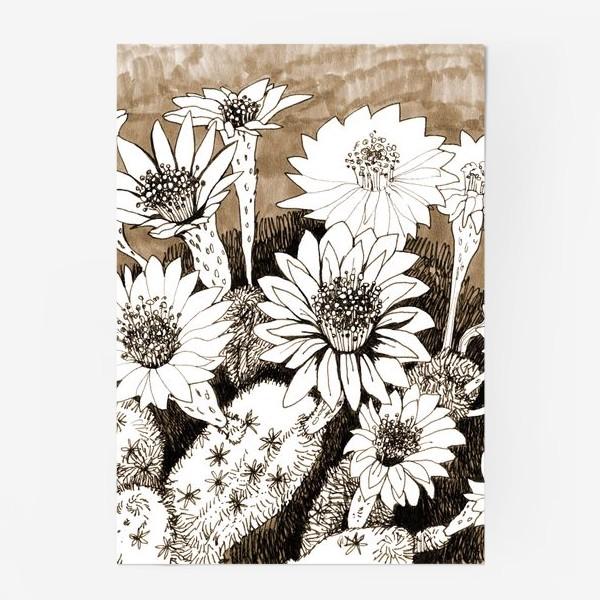 Постер «Кактусы в цвету»