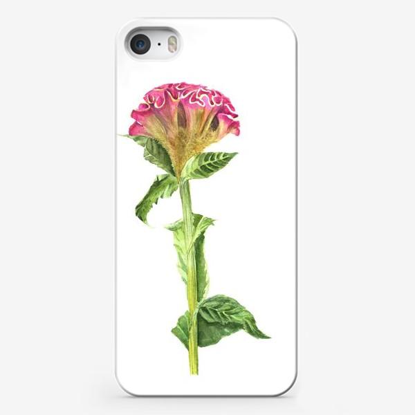 Чехол iPhone «Целозия»