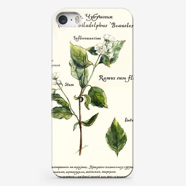 Чехол iPhone «Жасмин (Чубушник)»