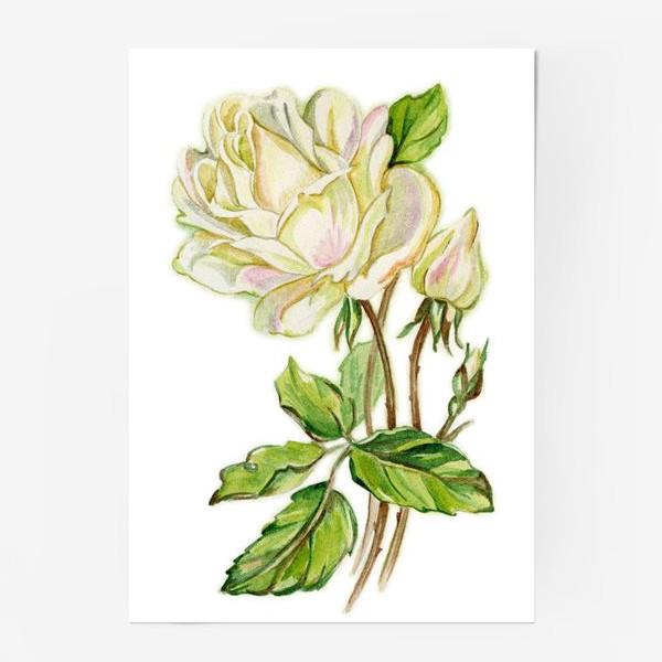 Постер «Белая роза»