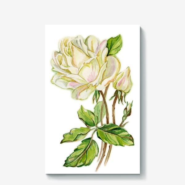 Холст «Белая роза»