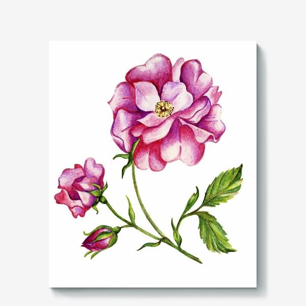 Холст «Роза шиповника»