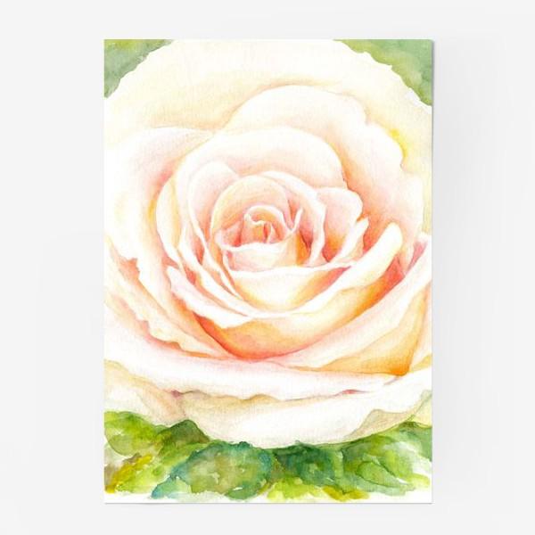 Постер «Роза нежная, как облако 2»
