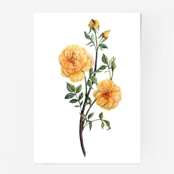 Постер «Желтые розы»