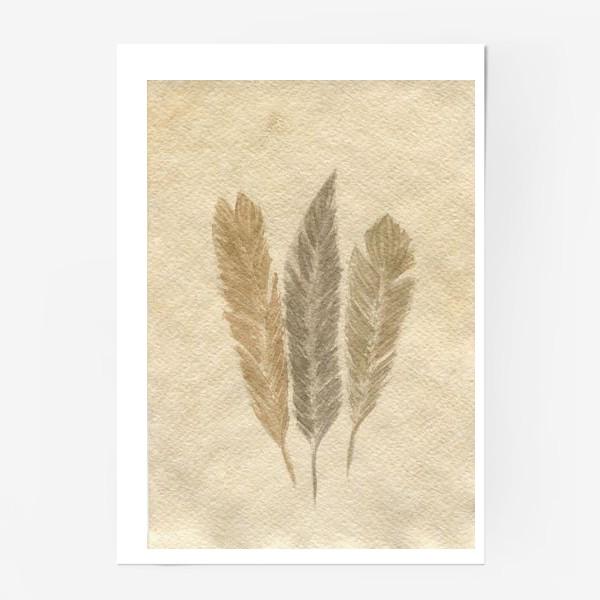 Постер « Кофейные перья »