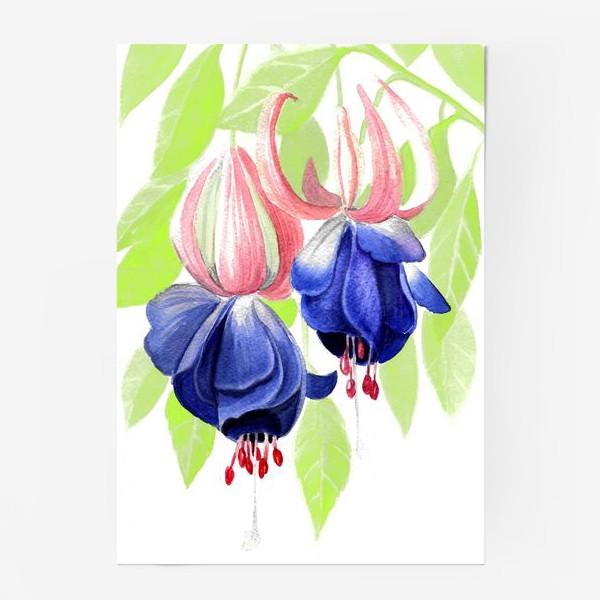 Постер «Комнатные цветы»