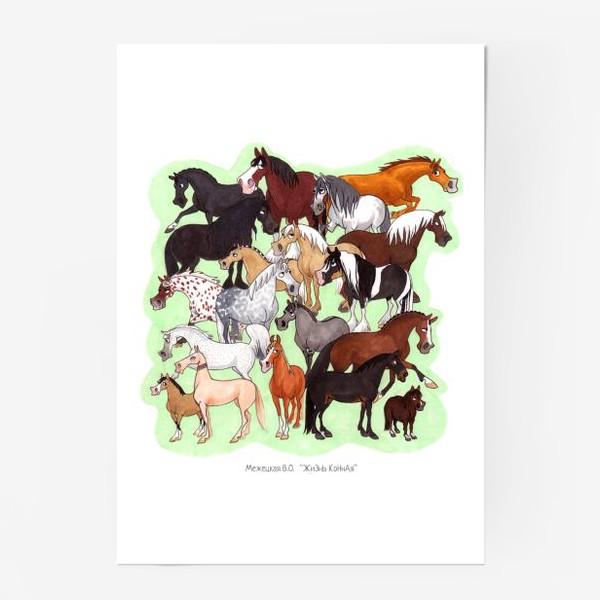 Постер «Конедудл»