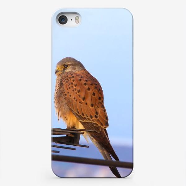 Чехол iPhone «Пустельга»
