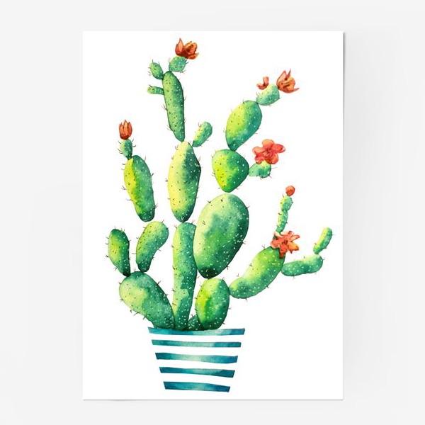 Постер «Кактус»