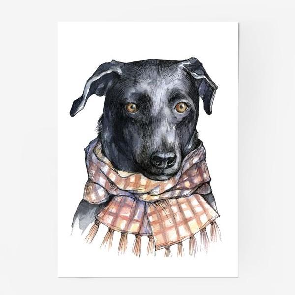 Постер «Собака и шарф»