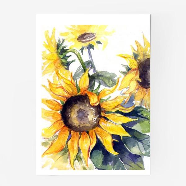 Постер «Sunflowers»