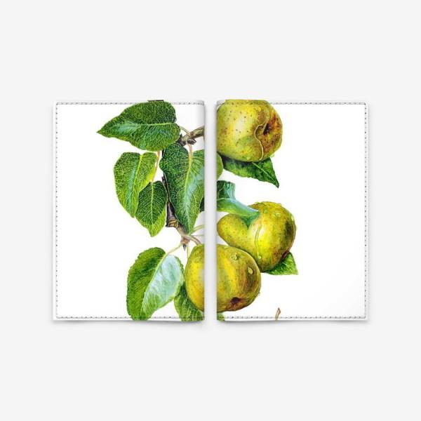 Обложка для паспорта «Фрукты, зелёные груши на ветке. Ботаническая иллюстрация»