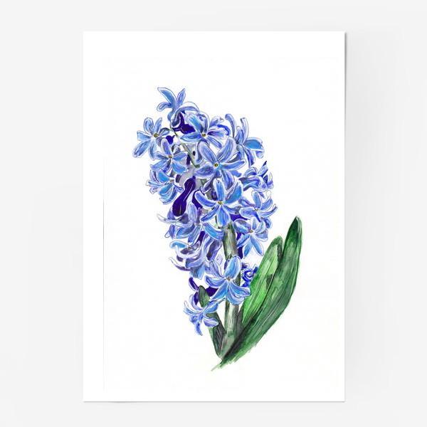 Постер «Синий гиацинт»