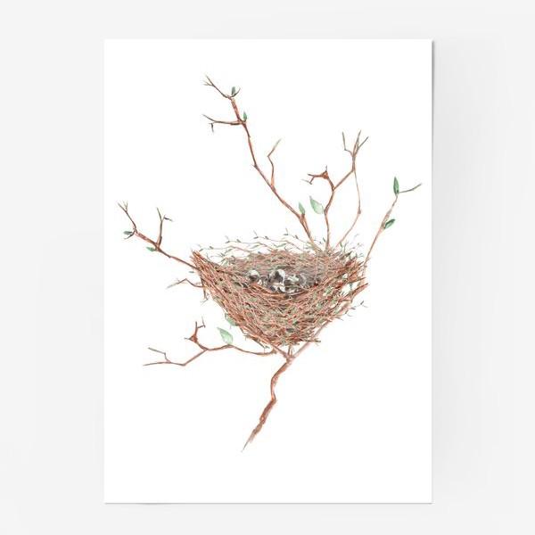 Постер «Птичье гнездо весной»
