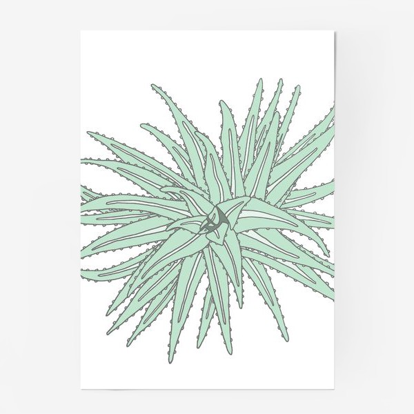 Постер «Succulent»