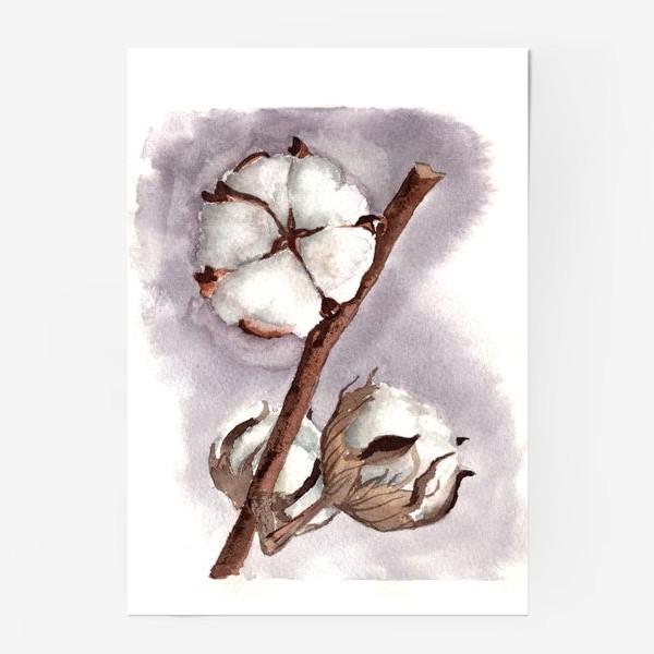 Постер «коробочки цветок хлопка»