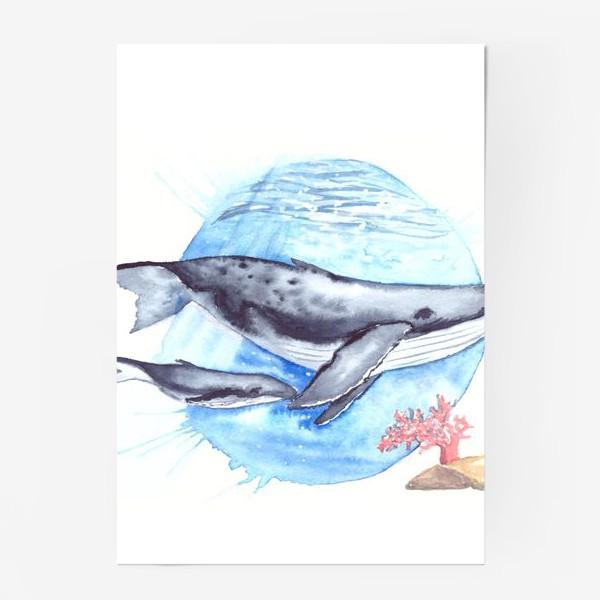 Постер «Кит с китенком на фоне круга море и коралл»