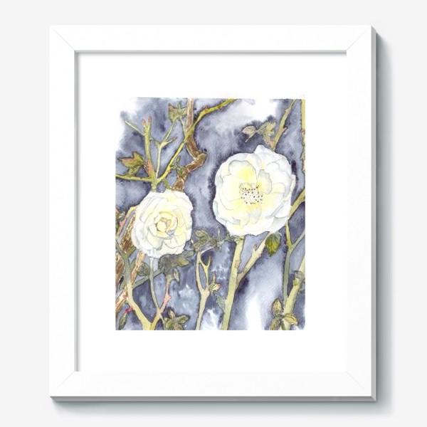 Картина «белый шиповник дикие розы»