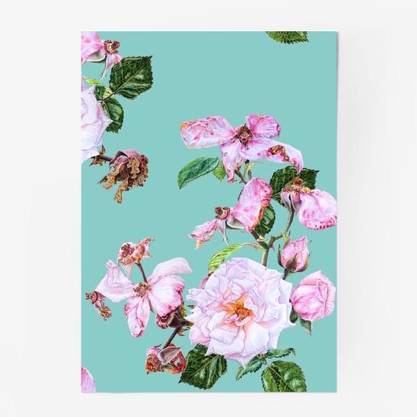 Постер «Розовые розы на голубом»