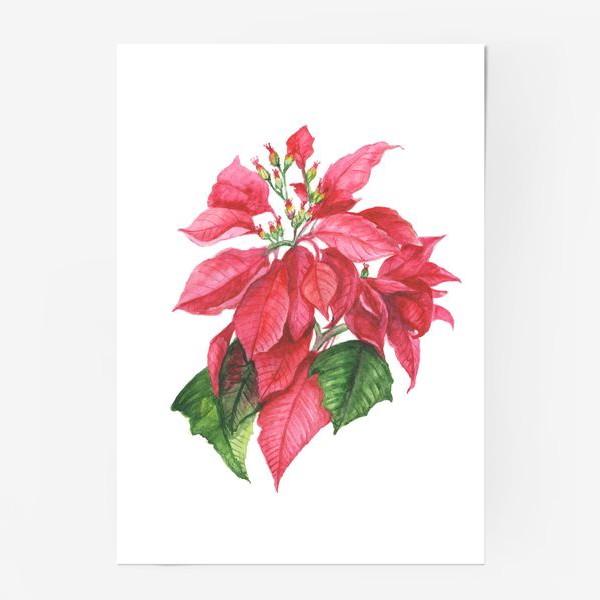 Постер «Пуансеттия. Рождественская звезда»