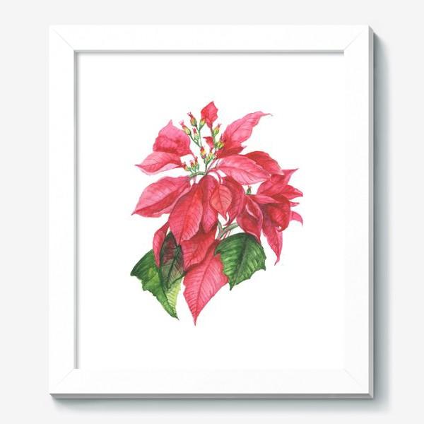 Картина «Пуансеттия. Рождественская звезда»