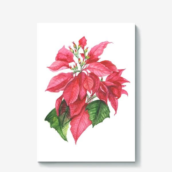 Холст «Пуансеттия. Рождественская звезда»