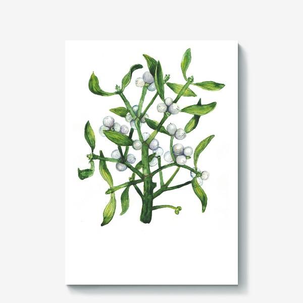 Холст «Омела. Рождественское растение»