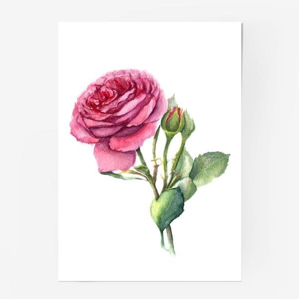 Постер «Роза с бутонами»