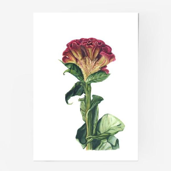Постер «Цветок целозия»