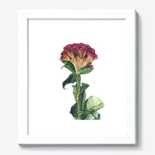 Картина «Цветок целозия»