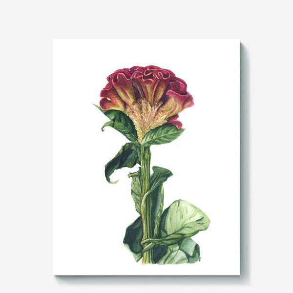 Холст «Цветок целозия»