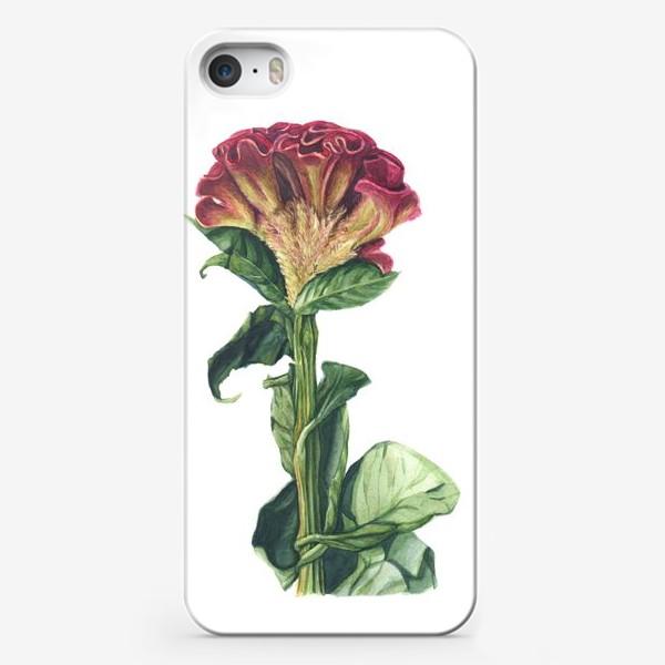 Чехол iPhone «Цветок целозия»