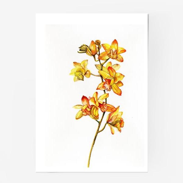 Постер «желтая орхидея»